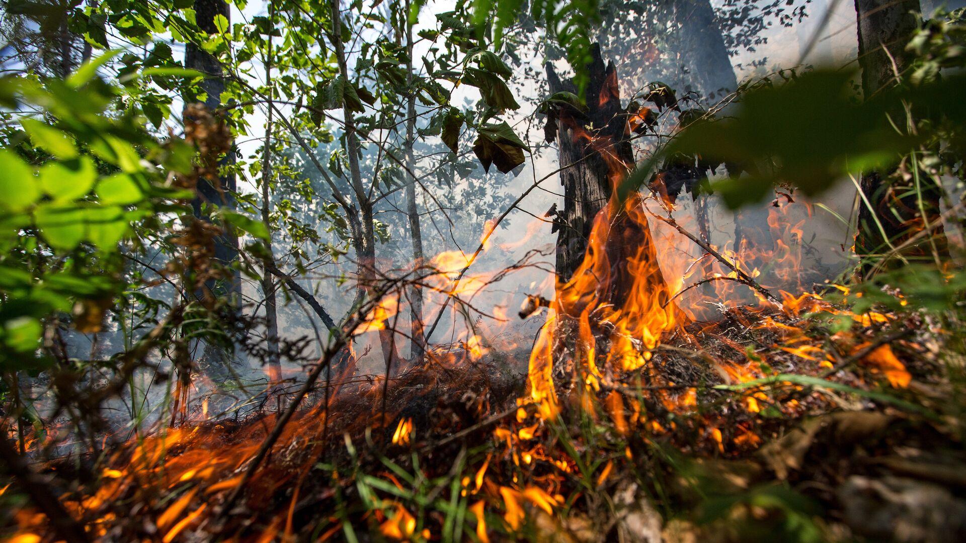 Лесной пожар в Шимановском районе Амурской области - РИА Новости, 1920, 09.09.2021