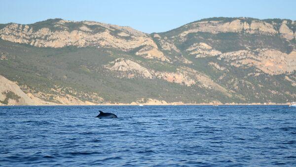 Дельфины в акватории Черного моря в Севастополе
