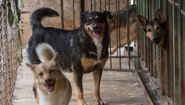 Бездомные животные в приюте. Архивное фото