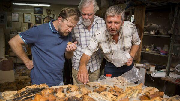 Ученые исследуют найденные в пещере останки древних животных