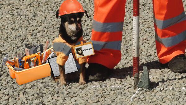 Бригадир Шпонка: как собака в униформе следит за ремонтом дорог