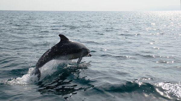 Дельфин в Черном море