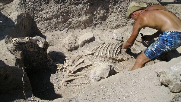 Обнаруженное археологами на могильнике Опушки конское погребение