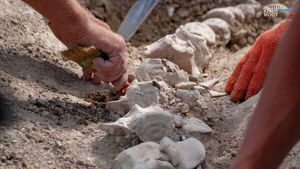 На участке будущей железной дороги-подхода к Крымскому мосту найден скелет древнего кита