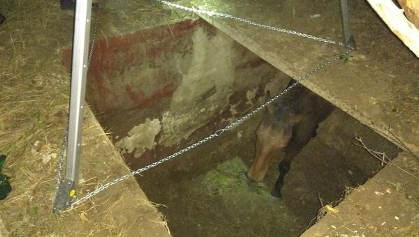 В Феодосии лошадь упала в двухметровую яму