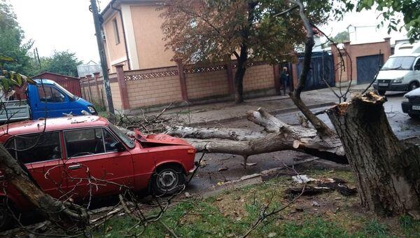 В Симферополе упавшее дерево смяло припаркованный рядом автомобиль ВАЗ-2103
