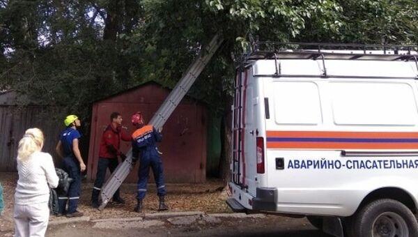 Крымские спасатели сняли с дерева жителя Москвы, который хотел помочь котенку