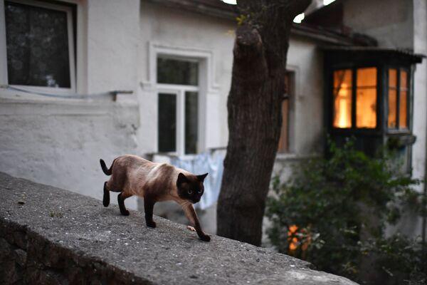 Кошка на одной из улиц Ялты