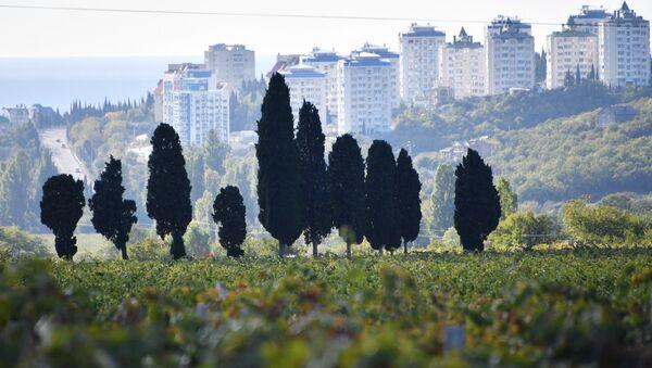 Виноградник возле Алушты
