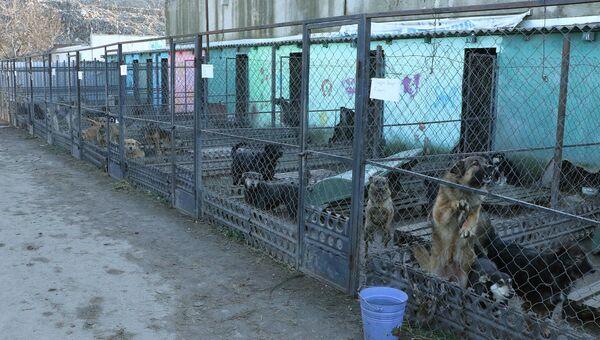 Приют для бездомных животных в микрорайоне Каменка в Симферополе