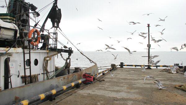 Чайки на причале в керченском порту