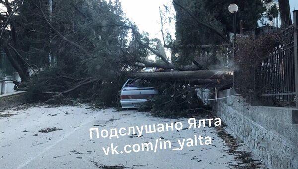 Упавшее от ветра дерево придавило автомобиль на ул. на ул. Щербака в Ялте. 1 марта 2019