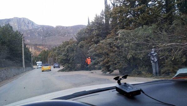 Упавшие от ветра деревья на трассе Ялта - Симферополь. 1 марта 2019