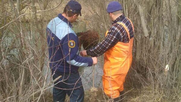 В Крыму сотрудники МЧС спасли упавшую в реку лошадь