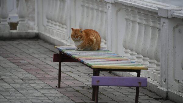 Кот на набережной в Коктебеле