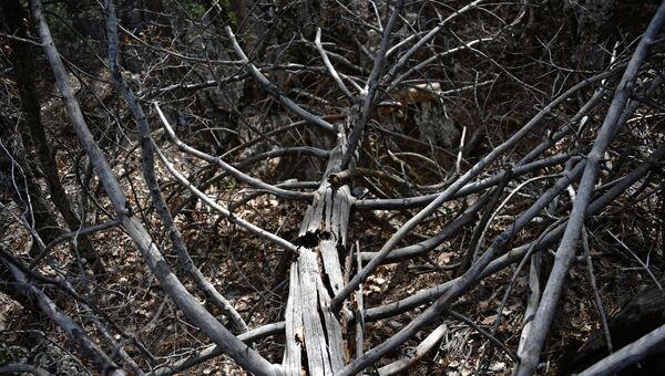 Сухое поваленное дерево в лесу. Архивное фото