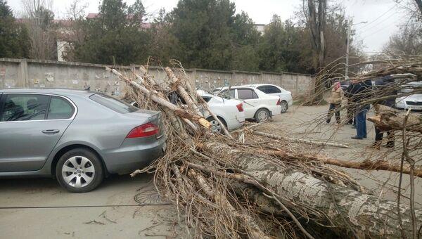 В Симферополе возле рынка Привоз дерево упало на припаркованные автомобили