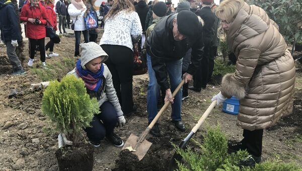 Высадка растений на набережной Ялты в рамках всекрымской акции В единстве - будущее