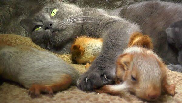 Необычное семейство: В Бахчисарае кошка взяла под опеку бельчат