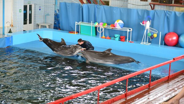 Дельфины Яна и Яша в дельфинарии Карадагской научной станции