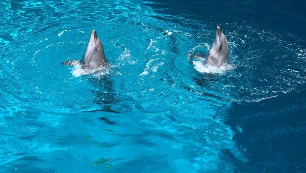 Выступление дельфинов в дельфинарии акварель в Алуште