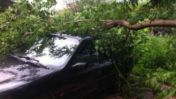 В Симферополе дерево рухнуло на машину из-за непогоды