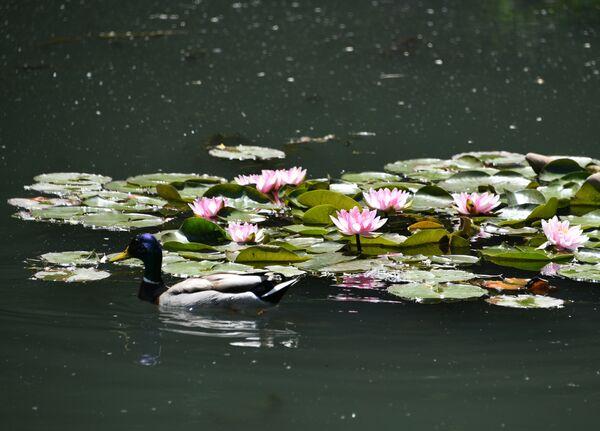 Пруд в Ботаническом саду в Симферополе