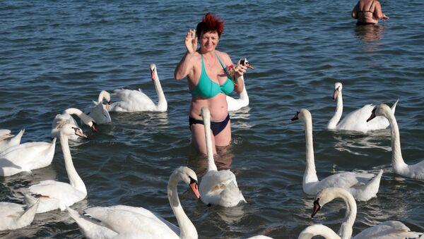 Лебеди в море на пляже недалеко от центрального парка культуры и отдыха имени Фрунзе