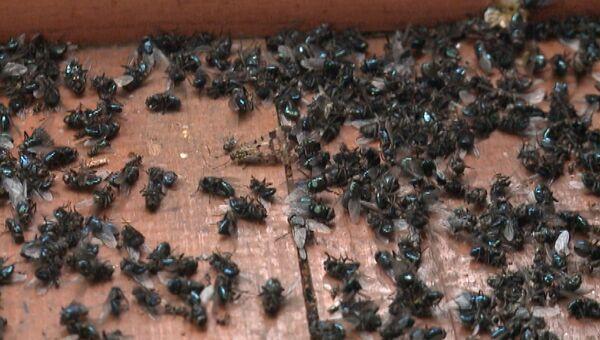 Нашествие насекомых: уральские села страдают от засилья мух