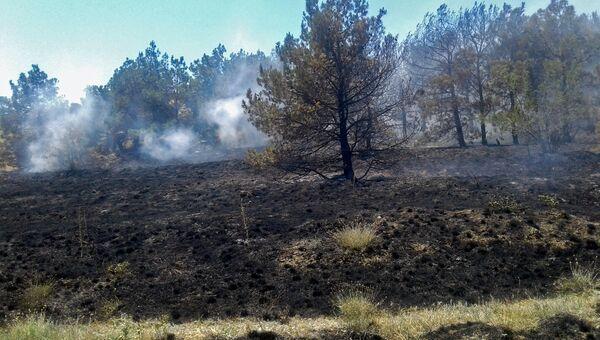 Последствия пожара на склоне горного массива Эчки-Даг в Феодосии