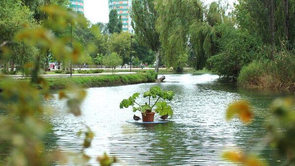 Плавающие клумбы в Гагаринском парке Симферополя