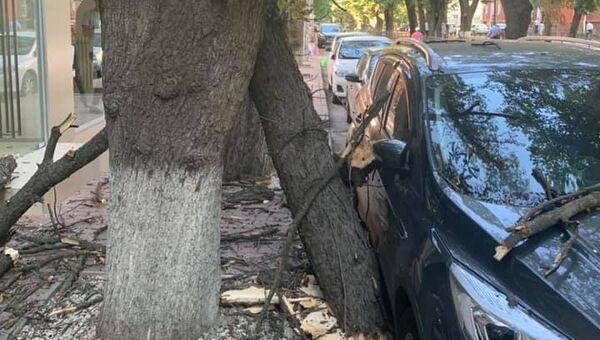 В центре Симферополя сухое дерево повредило автомобиль и многоэтажку