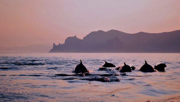Человек против моря: на чьей совести гибель дельфинов