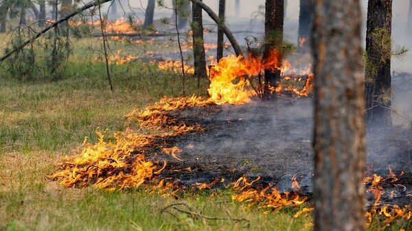 Лесной пожар в Добровской долине