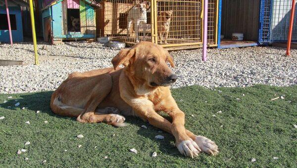 Собака в центре общественного объединения Ковчег в Ялте