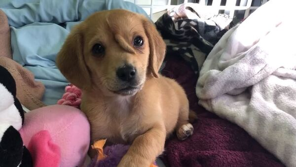 Видео с  собакой-единорогом
