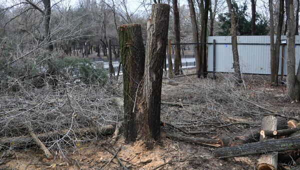 Вырубка деревьев малый Салгир Симферополь