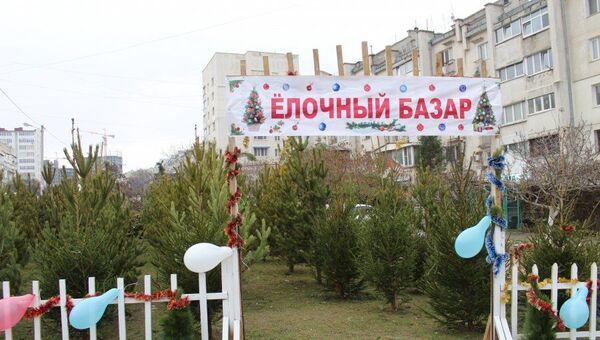 В Севастополе начали работу елочные базары