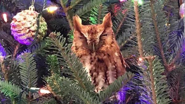 Сову на новогодней елке обнаружили не сразу