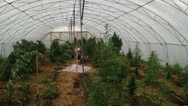Плантация наркосодержащих растений