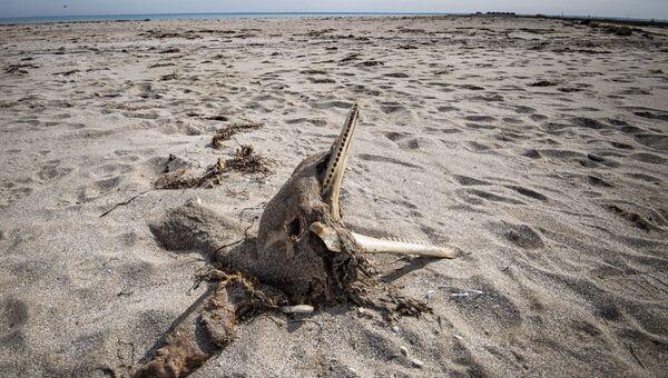 Мертвый дельфин. Архивное фото