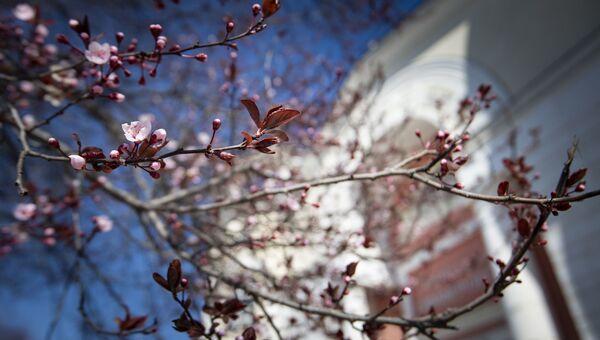 Весна Симферополь цветение