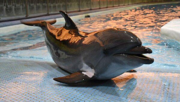 Краснокнижный дельфин из Крыма умирает в Иране