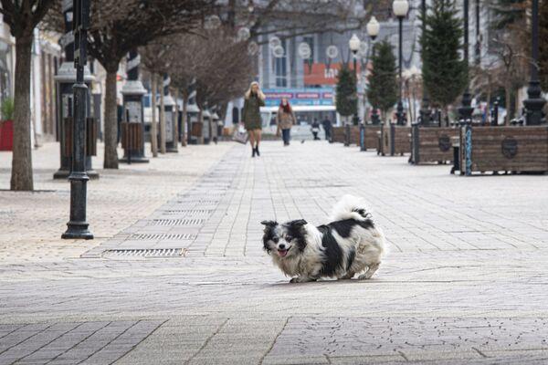Говорят, на улицах опустевших городов Европы появляются кабаны и кролики. У нас пока одни собаки.
