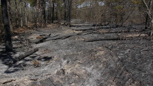 Пожар на склоне Тепе-Оба