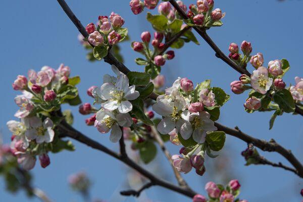 Весна цветущее дерево