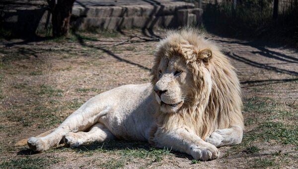 Тайган парк львов весна