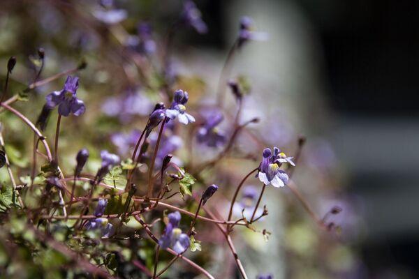Цветы маленькие макро