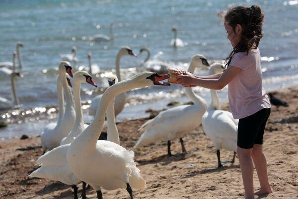 Девочка кормит лебедей на пляже в Евпатории