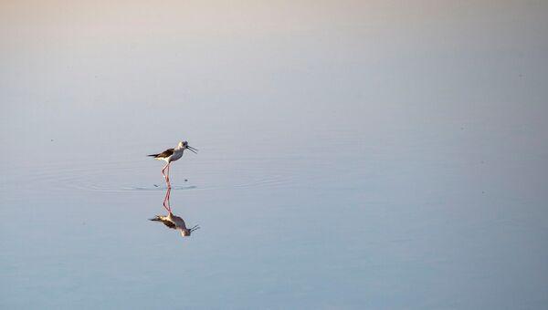 Опук Кояшское озеро